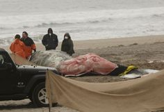 Mystery as US probes unusual rise in humpback whale deaths