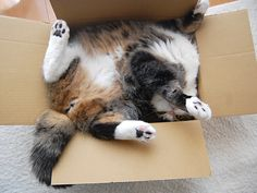Maru  Cat: some assembly required. Please read instructions first.