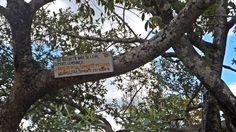 """No cartaz está escrito: """"Da natureza nada se leva, somente lembrança. Nada se deixa, somente pegadas. Nada se tira, somente fotografias."""" a poesia está em todo lugar. Chapada dos Veadeiros, Brasil."""