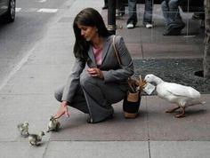 La patita ya no va al mercado... http://www.viceland.com/blogs/en/files/2009/11/pickpocket-550x417.jpg