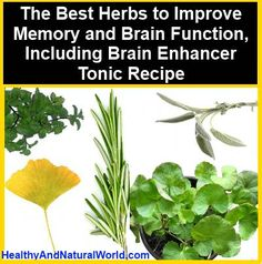 The Best Herbs to Improve Memory and Brain Function, Including Brain Enhancer Tonic Recipe   - - -   http://www.healthyandnaturalworld.com/the-best-herbs-to-improve-memory-and-brain-function/