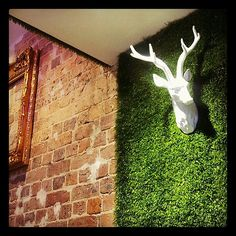 MooBerry - Feature wall with astro turf and exposed wall