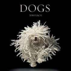 Dogs --- http://www.amazon.com/Dogs-Lewis-Blackwell/dp/0810996537/?tag=jamessellerso-20