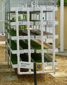 """Micro Greens Hydroponic system - Inside the """"Living with the Land"""" greenhouse at Epcot"""