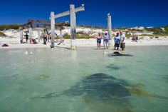 _EBT8685 Western Australia, Tourism, Surfing, Coast, River, World, Outdoor Decor, Photography, Turismo