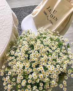 @ #цветы #растения #like4like #likeforlike #likeforfollow #flowers Aesthetic Painting, Aesthetic Drawing, Flower Aesthetic, Summer Aesthetic, Pastel Flowers, Simple Flowers, Vintage Flowers, Beautiful Flowers, Simple Flower Drawing