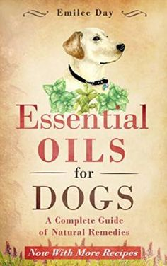 free ebook with lots of recipes for using essential oils with dogs  #dogysmag #dogs #dog #dogys