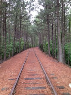 Old tracks in Stone Mountain Park- Stone Mountain,ga