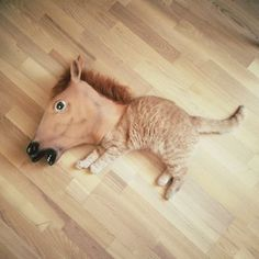 horse - fun - amazing