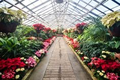Visiting+Rockefeller+Park+Greenhouse+in+Cleveland+Ohio