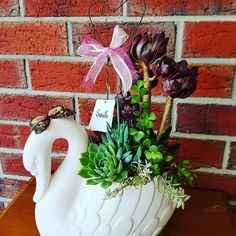 #tgifridays and heres a Custom #succulent #planter to make your loved one smile on #mothersday. PM for mothers day order.  .  .  .  .  . #succulentgift #succulentarrangement #succulents #succulentlove #homedecor #mothersdaygift #livinggifts #tinylittlekarma #smile #succulentaddict #melbournemade #pottedsucculents #melbournecity #etsyshop #swan #butterfly