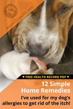 Easy Home Remedies for Dog Allergies and Dog Itch Relief — I recommend finding dog allergy remedies at home for your dog before heading down the road of expensive allergy testing. From allergy-friendly dog foods, supplements to medications, all to help Asthma Relief, Itch Relief, Dog Skin Allergies, Allergy Remedies, Itchy Dog Remedies, Itching Remedies, Dog Itching, Dog Care, Pets