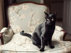 If you have furniture you want to keep cat-hair free, unsoiled or intact, train your cat to stay off of it. They dislike sticky tape, citrus-scented air fresheners and aluminum foil. Placing these items on or near the piece will deter your cat from scratching, walking or sleeping on it. > http://www.hgtv.com/decorating-basics/how-to-outsmart-your-cat-and-have-a-stylish-home/pictures/index.html?soc=pinterest