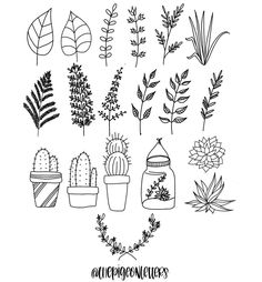 Step-by-step Botanical Drawings