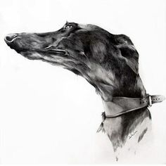 2012 International Animals Theme Online Art Exhibition - The Overall Winning Artists Category Greyhound Art, Italian Greyhound, Magyar Agar, Dog Artwork, Art Competitions, Dogs Of The World, Animal Paintings, Cute Baby Animals, Cat Art