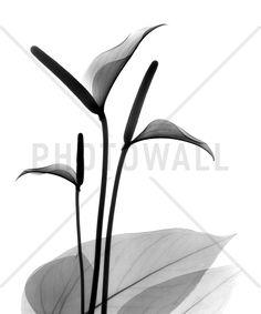 Flamingo Flower - Canvas Print & Canvas Art - Photowall