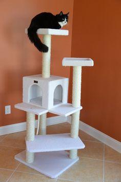 Petco Cat Tree