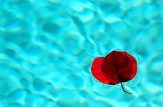 Aqua | Flickr - Photo Sharing!