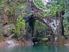 Ecuador rainforest | The Choco rainforest of Esmeraldas, Ecuador is beautiful, biodiverse ...