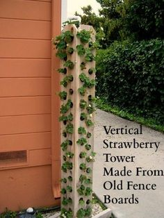 Mavis Mail April From Santa Cruz California Sends in Her Garden Photos Strawberry tower made from fence boards Omg Lettuces arugula spinach herbs of all kinds And uses way less dirt than a traditional pallet garden Strawberry Tower, Strawberry Garden, Fruit Garden, Garden Farm, Dream Garden, Garden Beds, Strawberry Planters Diy, Strawberry Beds, Garden Arbor