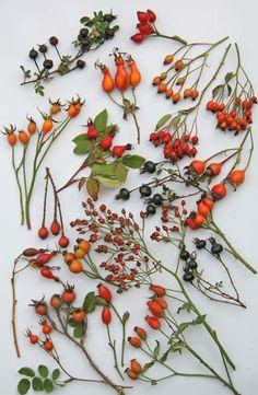 Wunderschöne Herbstdekoelemente aus der Natur auf weißem Untergrund. Traumhaft schön natürlich!