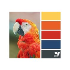 design seeds | for all who ♥ color ❤ liked on Polyvore featuring color palettes