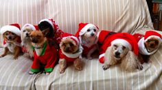Merry Christmas from Pets in Spain