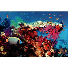 Fish and Coral (Underwater Scene) Art Poster