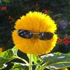 Kuvahaun tulos haulle flower