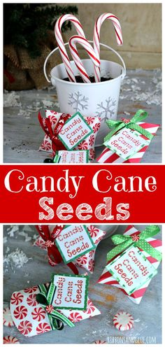 Plant Candy Cane Seeds on Christmas Eve  that magically turn into Candy Canes on Christmas morning.
