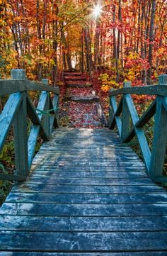 Bridge leading to fall foliage in Mont Orford National Park, Quebec.