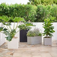 west elm's outdoor collection features stone planters, wall planters & more. Dress up your garden, terrace or entryway with modern planters.