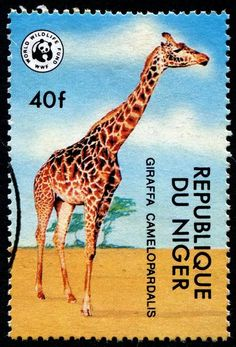 Giraffes - Stamp Community Forum - Page 5