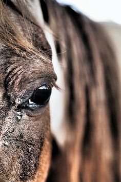 """"""" & then he whispered to the horse, Trust no man in whose eyes you do not see yourself reflected as an equal""""♥"""