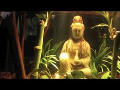 Zen Aquarium Tranquility Tank Part 1 - YouTube