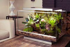 Terrarium Stand, Reptile Terrarium, Glass Terrarium, Aqua Decor, Vivarium, Planted Aquarium, Fungi, Habitats, Orchids