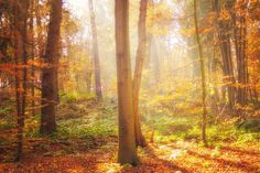 Nature Photography, Sun Light in Forest