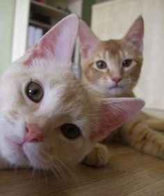 funny-cat-picture-photobomb-022