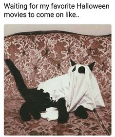This black cat is ready for Halloween! Crazy Cat Lady, Crazy Cats, Funny Animals, Cute Animals, Funny Pets, Photo Chat, Spooky Scary, Scary Cat, Fall Halloween