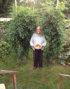 strawbale_gardening-9