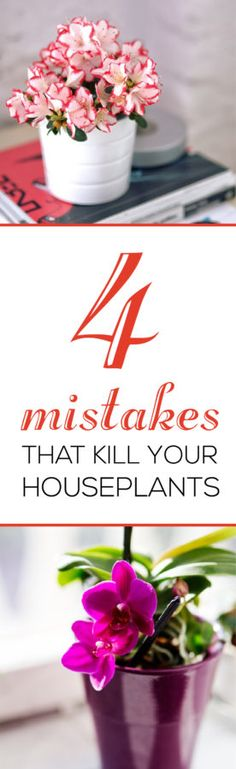 Learn the 4 Main Mistakes that Kill Your Houseplants!  To learn more gardening tips indoors and outdoors, check out this website, it will be worth your time.  SAVE for future use!