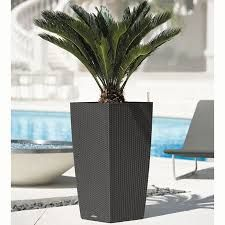 plante palmier exterieur en pot recherche google c t jardin pinterest voir les. Black Bedroom Furniture Sets. Home Design Ideas