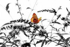 fotos-coloridas-em-preto-e-branco (10)