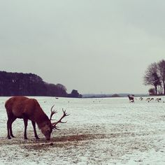 Tatton Park in Knutsford, Cheshire