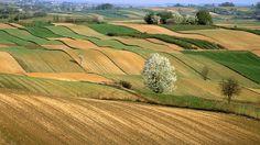 Il rapporto Agreenculture, realizzato da Fondazione Symbola e Coldiretti, ha fotografato un bilancio positivo nel consumo di energia per la produzione agricola. Grazie all'utilizzo di tecnologia green molte aziende agricole italiane utilizzano processi sostenibili durante la produzione; questo rapporto prende in esame il periodo dal 2008 al 2010. http://www.sorgeniaecopensiero.it/2013/03/18/agricoltura-che-cosa-puo-fare-la-tecnologia-green/