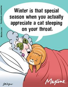 Winter is that special season when you actually appreciate a cat sleeping on your throat.