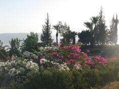 Mount of the Beattitudes Sea of Galilee The Beattitudes, Sea Of Galilee, Israel Travel, Holy Land, Places Ive Been, Things To Do, Landscapes, November, Paisajes