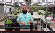 """When it comes to invasive plant species, hydrilla is one of the """"worst of the worst,"""" according to Aquatics Research and Extension Associate Dr. Brett Hartis. An N.C. Sea Grant video highlights the work that Hartis and others are doing to address the growing threat in the Chowan River and Albemarle Sound. https://www.youtube.com/watch?v=pctCLUYGpLw"""