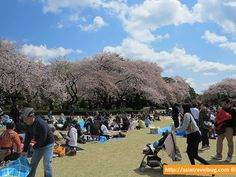 Want one-week access to wifi hotspots in Japan for just a little over one dollar per day? Now, it's possible with docomo Wi-Fi for Visitor. Tokyo Travel Guide, Japan Travel, Travel Guides, Shinjuku Gyoen, Go To Japan, One Dollar, Tourist Spots, Where To Go, Kyoto
