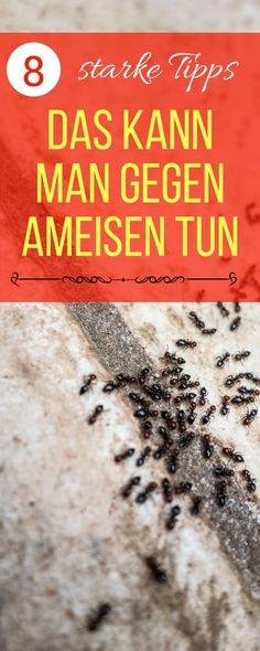 Die 7 Besten Bilder Von Hausmittel Gegen Ameisen Outdoor Plants